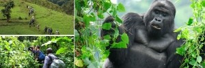 3 days Gorilla Tour Bwindi Impenetrable Forest