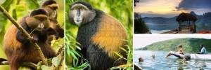 golden-monkey-treeking-and-lake bunyonyi