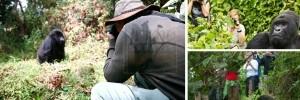 5 days Rwanda Uganda Gorilla Trekking Safari