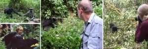 4 Days Uganda Gorilla Wildlife Safari Bwindi Lake Mburo Park