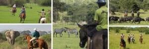 8 Days Uganda Gorilla Safari & Wildlife Tour Uganda