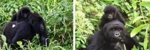 10 days Gorilla & Wildlife Safari Uganda-Rwanda