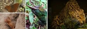 nyungwe-animals