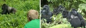 rwanda-gorilla-trekking