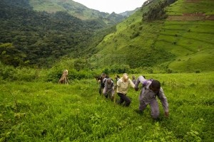 Rwanda Safari Trip Advice
