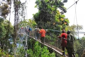 Rwanda gorilla tracking safaris