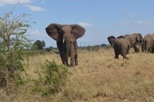 8 Days Rwanda Adventure & Classic Gorilla Trekking Safari Tour