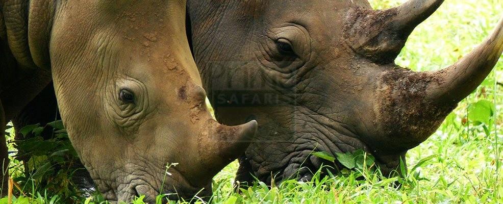 13 Days Rwanda Safaris - Uganda Gorilla wildlife safari