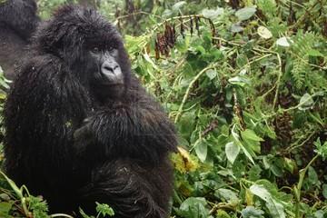 uganda safaris tours