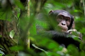 8 Days Gorilla Trekking Safari Rwanda